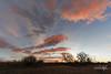 Pink Clouds Before Sunrise (dcstep) Tags: f4a4809dxo pink clouds sunrise trees bluesky pinkclouds sonya9 fe100400mmf4556gmoss fe14xteleconverter handheld allrightsreserved copyright2017davidcstephens dxophotolab101 cherrycreekstatepark colorado usa aurora
