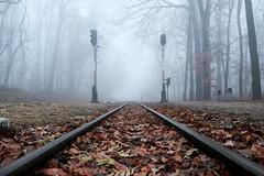 misty rails (2)  [explored 6 Dec 2017] (zzra) Tags: train tracks mist misty fog low perspective leaves