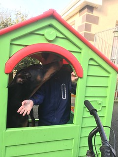 """it's my dog house""............""No, it's my playhouse!"" - Dobermann Pinscher Saxon and friend."