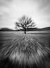 Transience / Transitoriedad (toncheetah) Tags: autumn icm zoom zooming