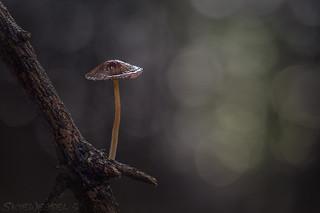 Mushroom on a Stick