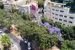 A View of Rothschild Blvd. from The 65 Hotel (pringle-guy) Tags: nikon telaviv israel תלאביב בתיםמבפנים ארכיטקטורה אדריכלות עיצוב building architecture design