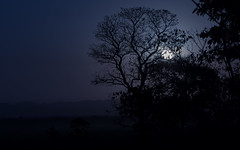 there's a moon rising (tsd17) Tags: moonlight canon 7dmk11