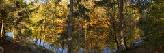 _T1A3615-Amber Colour and Pond (idunavision) Tags: donoperteich forest wald beechtrees buchen h fall autumn golden olympus leica canon teich ponderbst