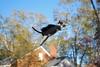 Flying High (rootcrop54) Tags: needle felted needlefelting wool cat sculpture miniature superhero flying cape ooak neko macska kedi 猫 kočka kissa γάτα köttur kucing gatto 고양이 kaķis katė katt katze katzen kot кошка mačka gatos maček kitteh chat ネコ 9incheslong art fallcolor