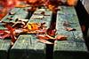 autumn (Kati471) Tags: herbst autumn blätter foliage leaves bank herbstzeit laub verfärbt natur nature