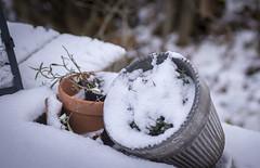 Övergiven Fotosöndag 171126 (My Photolifestyle) Tags: fs171126 overgiven fotosondag nature vintertime vinter