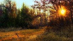 Heading Home (Bob's Digital Eye) Tags: 2017 back30 bobsdigitaleye canon canonefs55250mmf456isstm field flicker flickr minnesota november sunset t3i trees woodsforests forest