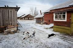 L1220822-beloshchelye2017 by Emil Gataullin - Beloshchelye, Arkhangelsk region, Russia, 2017