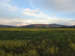 plain landscape (cdavid laurier) Tags: grass field nature mountains sky sunset wyoming usa sagebrush plain wild