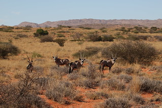 South Africa Hunting Safari - Northern Cape 60