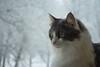DSC_0023-2 (AnoeshN) Tags: dima cat