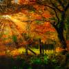 Autumnal Thornley Woods (mandyhedley) Tags: thornleywoods northeastengland woodland autumn sunrays sunlight orange woods trees landscape flickrunitedaward greatphotographers