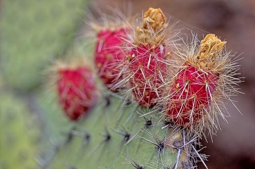 Jardin del Cactus
