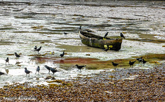 Low Tide-Watamu Kenya (johnfranky_t) Tags: kenya kenia watamu bassa marea uccelli johnfranky t alghe cima