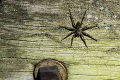 Pine Barrens of NJ (McKinnon99879) Tags: pine barrens pines piney nature landscape woods fishing spider sunset trees