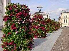 Una calle de Roubaix (dra.senaide) Tags: roubaix lille francia