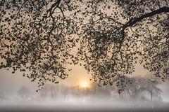 Réveil d'automne sous la couverture (Bertrand Thiéfaine) Tags: d750 arbre automne brume feuilles forêt leverdujour nikon oudon vol oiseau matin