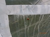 PA130090, my garden - ladybug (guenter.huth) Tags: marienkäfer