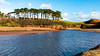 Pine trees and the River Otter (Keith in Exeter) Tags: river otter pine tree landscape blue water sky ridge coast estuary budleighsalterton devon saltmarsh cliff stream shingle