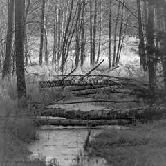 20171107003250 (koppomcolors) Tags: koppomcolors forest skog