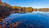 Leaves And Reflections On The Basha Kill (John Kocijanski) Tags: hss leaves water reflections landscape wetlands fall autumn canon1740mmllens canon5dmkii sullivancounty