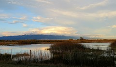 Cloud Covered (Patricia Henschen) Tags: alamosa colorado sanluisvalley goldenhour mountains clouds rural southriverroad backroad autumn snow sangredecristo wetland reflection