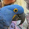 Key West (Florida) Trip 2016 2728Ri sq (edgarandron - Busy!) Tags: florida keys floridakeys keywest bird birds nancyforrester nancyforresterssecretgarden secretgarden