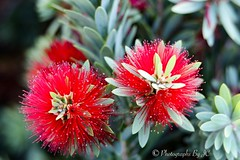 Urban beauty (stormrider770) Tags: canon80d niftyfifty urbanbeauty urban walmart escondidoca flowers