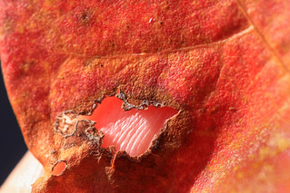 Through a hole in a leaf.