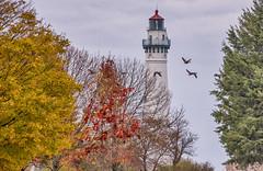 Wind Point Lighthouse (Gillfoto) Tags: milwaukee wisconsin windpointlighthouse geese autumn
