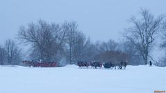 Bientôt l'hiver à Québec, Canada - 6850 (rivai56) Tags: carnaval québec plaines hiver carrioles de neige pendant le cheval horse chevaux