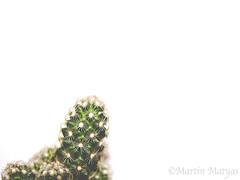 der kleine Kaktus (Martin.Matyas) Tags:
