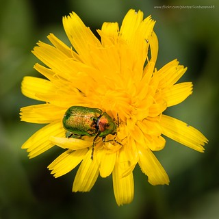 Jewel beetle?
