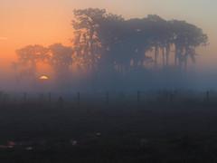 Swamp Dawn (joiseyshowaa) Tags: 20150106sunriseandbaby san antonio st leo pasco hernando hillsborough county swamp water reflection sun rise sunrise morning dawn evening dusk trees pine weeds puddle lake