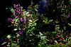 albahaca (M. Martin Vicente) Tags: jardínbotánicodemadrid octubre2017 otoño rjbm albahaca