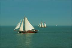 sailing........ (atsjebosma) Tags: sailingboats waddenzee waddensea thenetherlands nederland atsjebosma november autumn 2017 afsluitdijk bird zeevogel herfst