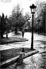 _IGP4517 (zalo_astur) Tags: parque oviedo asturias pavo paseo arboles lluvia farolas