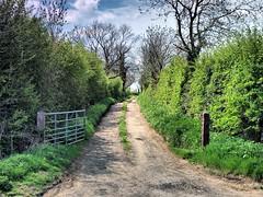 May in Rutland 023 (saxonfenken) Tags: 6851tree 6851 gate farmtrack dirtroad hedge perpetual challengeyouwinner friendlychallenges pregamewinner tcf agcgwinner sweep gamewinner gamesweep yourock