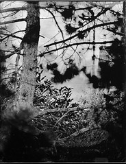Collodion humide arbre sapin maison - ambrotype, collodion, collodion humide, humide, scann.jpg (Meditant) Tags: collodion scann ambrotype humide collodionhumide
