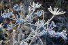 Frosty drawings of November (swetlanahasenjäger) Tags: magicmoments frostigemalerei wiesenblumeninfrost november herbst saariysqualitypictures coth naturescarousel coth5 alittlebeauty fotografíavisión fantasticnature ngc quintaflower npc thegalaxy greenscene