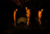 Strolling through the dark forest (luisbaneres) Tags: dark horror night season mist fairytale landscape misty weather ray ground darkness moonlight foggy fantasy black rain halloween morning dusk magical green magic rainy moon full purple mood nightmare old mystery dawn light branch moonlit shadow autumn tree nature forest wallpaper fog fear plant haze blue evil