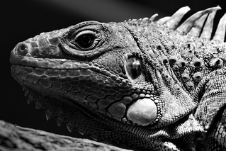 Parc zoologique de Paris 02.10.2016 0J5A9808