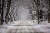 foggy morning (Fotos aus OWL) Tags: schnee landschaft winter natur senne strase allee bäume