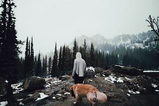 roaming in the fog