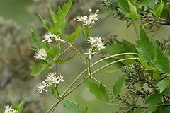 Anglų lietuvių žodynas. Žodis rock-plant reiškia n kalnų augalas lietuviškai.