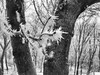 gelo (enrico sprea) Tags: ghiaccio albero cittadella budapest ungheria inverno allaperto pentaxlife gelata neve parco bianco brina galaverna minoltadimagef300 rami tronchi alberi buda bwartaward biancoenero blackandwhite monocromo aghi vento gelo tronco bosco foresta collina