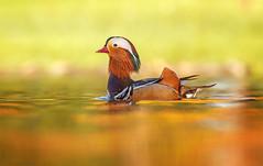 Mandarin Orange (E_Rick1502) Tags: