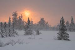 Let It Snow! Let It Snow! Let It Snow! (Fjällkantsbon) Tags: lappland sverige blaikfjalletsnaturereserve blaikfjälletsnaturreservat midvinter evamårtensson skymning december västerbottenslän se midwinter lapland snowshower snö snöby