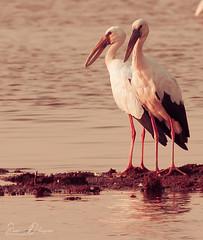 DSC_9415 (@sumitdhuper) Tags: beauty wallshare animal birds